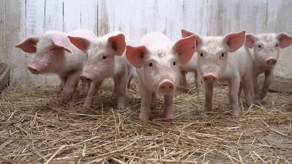 China anuncia la retirada de aranceles a la soja y al cerdo estadounidenses